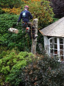 Baumfällung in schwieriger Lage